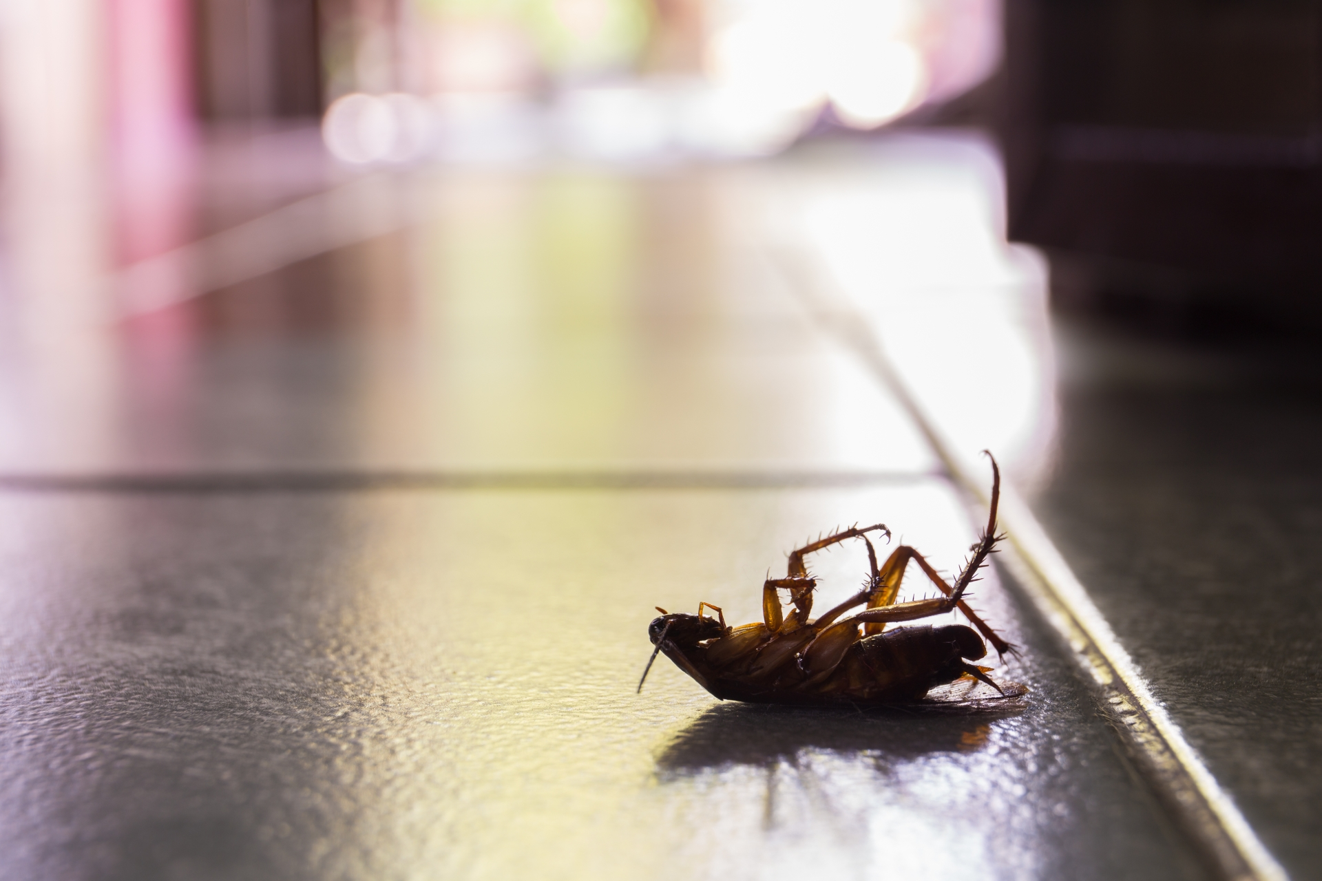 Cockroach Control, Pest Control in Winchmore Hill, N21. Call Now 020 8166 9746