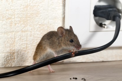 Pest Control in Winchmore Hill, N21. Call Now! 020 8166 9746