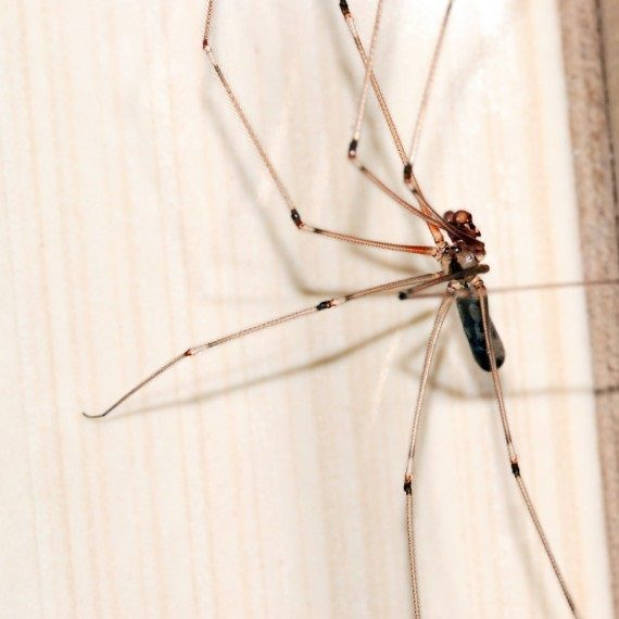 Spiders, Pest Control in Winchmore Hill, N21. Call Now! 020 8166 9746